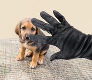 Vol des chiens photo stock