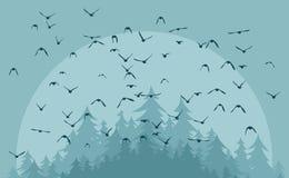 Vol des oiseaux Photo libre de droits