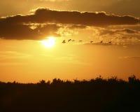 Vol des oiseaux dans le coucher du soleil Image libre de droits