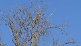 Vol?e des oiseaux sur un arbre banque de vidéos