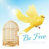 Vol jaune canari d'affiche de cage illustration de vecteur