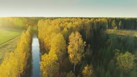 Vol jaune de bourdon de la forêt 4K d'automne dans la ville Lettonie de Sigulda banque de vidéos