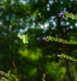Vol jaune de papillon Photographie stock