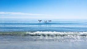 Vol outre de l'eau photos libres de droits