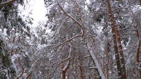 Vol par la forêt de pins d'hiver clips vidéos