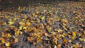 Vol plus de des feuilles d'automne banque de vidéos