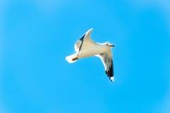 Vol pour gratuit photo libre de droits