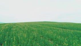 Vol a?rien de bourdon au-dessus de champ d'herbe verte avec des fleurs banque de vidéos