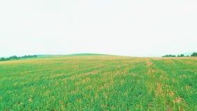 Vol a?rien de bourdon au-dessus de champ d'herbe verte avec des fleurs clips vidéos