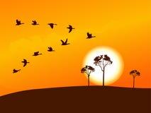 Vol sauvage d'oie dans le coucher du soleil Image stock