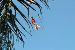 Voladores akrobata wykonawcy przy Latającymi mężczyzna Fotografia Royalty Free
