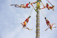 Voladores performing flying men show. Royalty Free Stock Photo