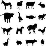volaille de bétail Photographie stock libre de droits