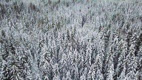 Volando in basso sopra la grande foresta nell'inverno freddo video d archivio