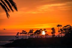 Volando fuori nel tramonto Immagine Stock
