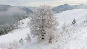 Volando intorno ad un bello albero stesso congelato Racconto di inverno Paesaggio da ammirare stock footage