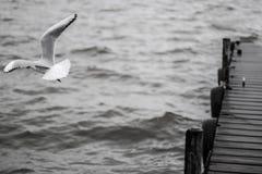 Volando liberamente intorno al mare Fotografia Stock