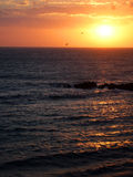 Volando nel tramonto Fotografia Stock
