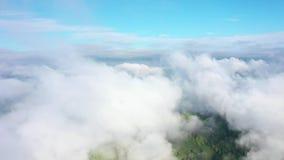 Volando sobre una selva tropical asombrosa, visi?n a?rea sobre selva tropical con niebla en la salida del sol v?deo a?reo 4K, almacen de video
