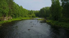 Volando su dal fiume veloce della foresta in Carelia, Russia archivi video
