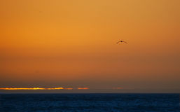 Volando verso il tramonto Fotografia Stock
