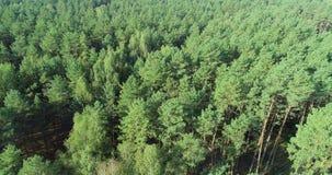 Volant au-dessus d'une for?t de pin, volant au-dessus des cimes d'arbre clips vidéos