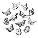 Volar mariposas negras y blancas Imágenes de archivo libres de regalías