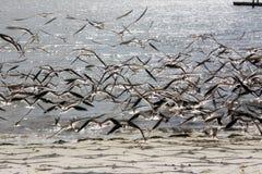 Volata degli uccelli fotografia stock