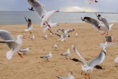 Volata degli uccelli Fotografia Stock Libera da Diritti