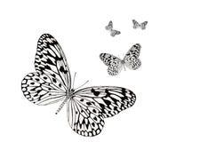 Volata delle farfalle Fotografia Stock Libera da Diritti