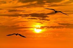 Volata delle siluette degli uccelli Fotografie Stock Libere da Diritti