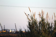 Volata libera degli uccelli immagine stock