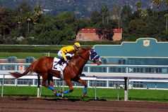 Volbloed- Paardenrennen Stock Foto