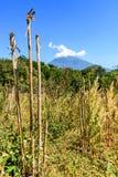 Volcán del Agua, arbolado y área overgrown foto de archivo
