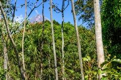 Volcán y arbolado activos de Pacaya imagenes de archivo