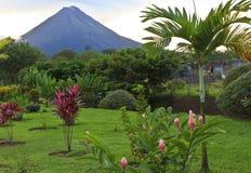 Volcán y palmera de Arenal imagen de archivo libre de regalías