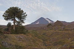 Volcan亚伊马火山在Conguillo nacional公园,智利 免版税库存图片