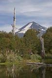Volcan亚伊马火山在Conguillo nacional公园,智利 库存照片