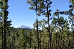 Volcan杉木泰德峰和森林  免版税库存图片