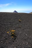 Volcan阿卡特南戈火山在安提瓜岛,危地马拉附近的山顶高原 免版税库存照片