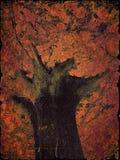Volcan d'arbre Photo libre de droits