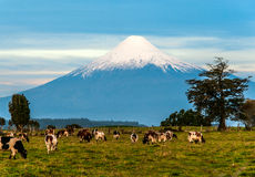 Volcan d'Osorno, région de lac, Chili Photographie stock