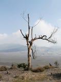Volcan de Bromo, Java Indonesia Images stock