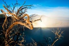 Volcan de Kawah Ijen avec des arbres pendant le beau lever de soleil dans Java-Orientale, Indonésie Photo libre de droits