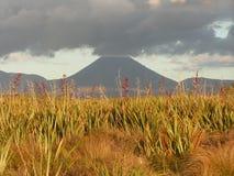 Volcan de la Nouvelle Zélande Images libres de droits