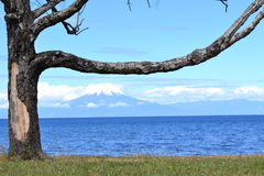 Volcan derrière l'arbre Images libres de droits