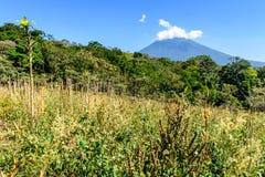Volcan et campagne d'Agua Images libres de droits