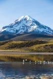 Volcan et lac Huayñacota Sajama La Bolivie andine Photographie stock libre de droits