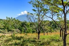 Volcan et région boisée d'Agua Image stock