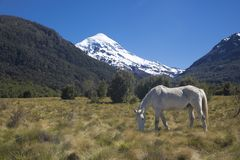 Volcan Lanin, Patagonia, Argentyna Zdjęcie Royalty Free